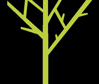 albero-verde-sfondo-bianco_410x360